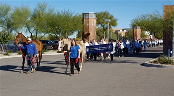 Horses meet the CVM Class of 2018 to lead them to the Animal Health Institute, where students began their first clinical rotations.